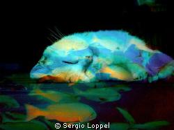 Dream / Cat by Sergio Loppel