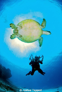 Photographer and the Sea turtle Shot in Tubbataha, South... by Joshua Tappert