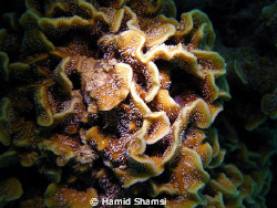 kish Island,Camera: Canon G9, by Hamid Shamsi