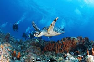 Drift dives ! by Juan Cardona