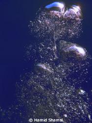 Air Bubbles by Hamid Shamsi