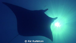 Giant Manta Ray cruises overead and eclipses the sun Ger... by Ric Ruhlman