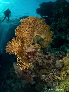 Fire coral. by Bea & Stef Primatesta
