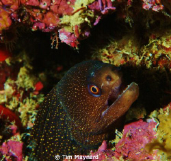 Young eel... by Tim Maynard