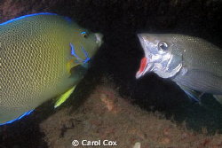 How's my breath?  I have a hot date with a tuna tonight! by Carol Cox