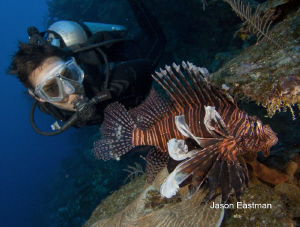 Diver Encounter with a Red Lionfish East End, Grand Caym... by Jason Eastman