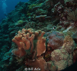 Coral Sea.  Canon G-10.  Ikelite housing, strobes and dome. by Bill Arle