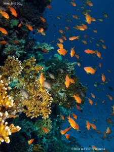 Just Red Sea :-). by Bea & Stef Primatesta