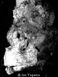 Planet of the Apes, white humpback scorpionfish, anilao p... by Jun Tagama