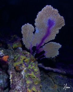 The Sugar Wreck offers a perfect spot for a night dive an... by Steven Anderson