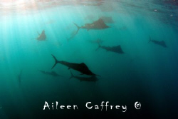 The Boys are Back in Town! by Aileen Caffrey