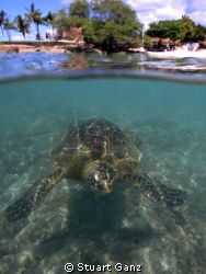Over/uder of Green Sea turtle taken with Canon 20D W/10-2... by Stuart Ganz