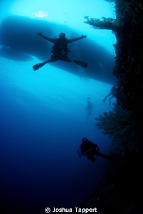 Freefallin the wall.  Dive Master Paul in Tubbataha. Azor... by Joshua Tappert