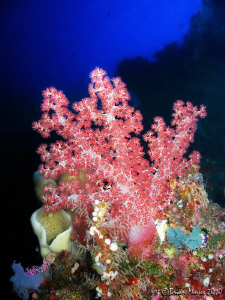 Soft coral at Bunaken by Brian Mayes