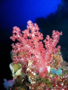 Soft coral at Bunaken by Brian Mayes