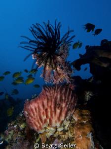 lots of stunningly beautiful sponges at the Alam Batu hou... by Beate Seiler