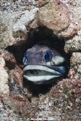Jaw fish. Canon EOS 50D + Sigma 18-50mm MACRO by Alexander Nikolaev