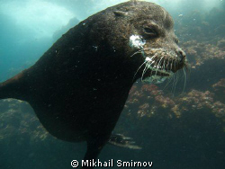 Sea lion near Cousin rock, Galapagos. by Mikhail Smirnov