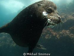Sea lion near Cousin rock, Galapagos. by Mikhail Smirnov