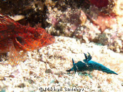 Nudi and ?  Near Cousins rock, Galapagos by Mikhail Smirnov
