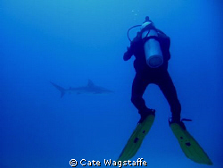 Hunting the hunter... by Cate Wagstaffe