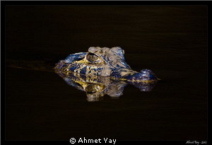 Cayman at night... by Ahmet Yay