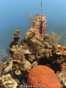 Another Roatan reef scenic with available light. by David Gilchrist