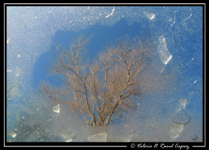 A window through the ice.