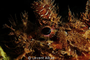 Rock Fish by Levent Albas