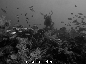 Reef with diver by Beate Seiler