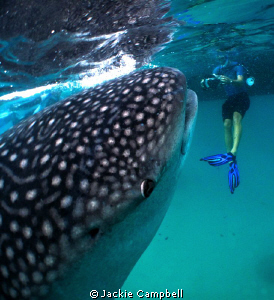 Whaleshark interaction :)  by Jackie Campbell