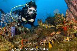Roatan diver looking at crab, D300, Tokina 10-17 lens by Larry Polster