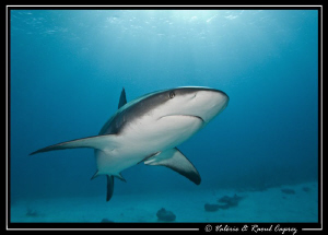 Nice encounter in the Bahamas by Raoul Caprez