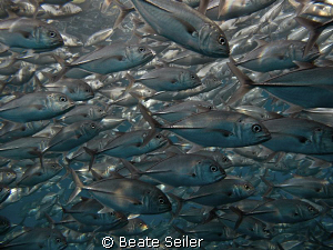 The end of the dive at U.S. Liberty / Tulamben / Bali by Beate Seiler