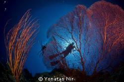 Red & Blue by Yonatan Nir