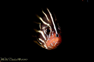 Out of the dark! by Mona Dienhart