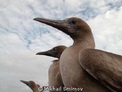 Cormorants.  by Mikhail Smirnov