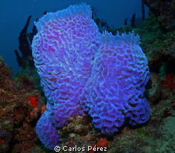 Sponge @ El Natural Beach Aguadilla PR by Carlos Pérez