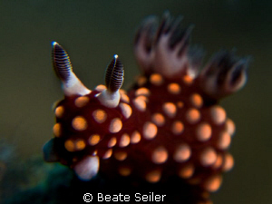 Nembrotha, taken with Canon G10 and 2 X UCL165 by Beate Seiler