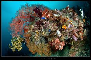 House reef_Misool by Mathieu Foulquié