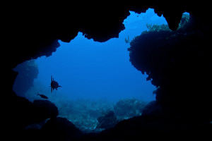 Silhouette of a Barracuda lurking at the entrance to a sw... by Paul Colley