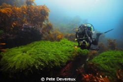 Entrance to Jan's Tunnel at Poor Knights Island circa 10m by Pete Devereux