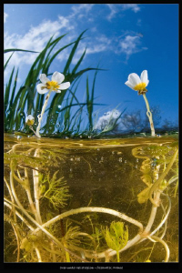 over under heliotropism_freshwater, France by Mathieu Foulquié