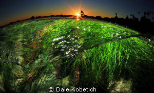 """"""" i lay in a bed of cool green grass """"....half above and ... by Dale Kobetich"""