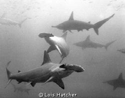Taken at Wolfe Island by Lois Hatcher