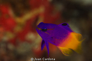 colors & fish... by Juan Cardona