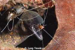 Eel and cleaning shirimp