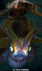 Squid Pro Quo by Tony Cherbas