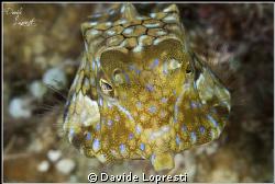 Pesce scatola by Davide Lopresti