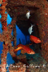 Dive Buddies, Barco Hundido Juan Escutia Puerto Morelos by Aileen Caffrey